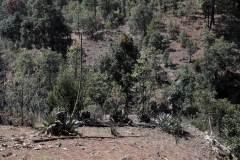 10-paisaje-quiote