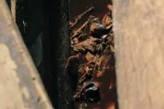 18-fermento-en-pileta-de-madera