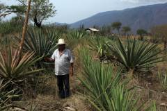 10-chayo-entre-agaves