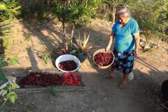 9-Guadalupe-con-chiles-y-jamaica