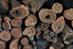 8-troncos-roble