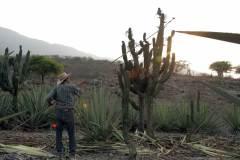 18santos-colectando-pitaya