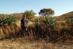 01-Teodoro-entre-agaves